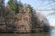 Bäume am Teich