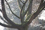 Friedhofsbaum im Herbst