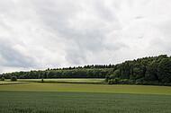 Acker am Wald