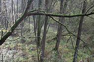 Naturbelassenes Feuchtgebiet
