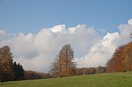 Herbstsolitär