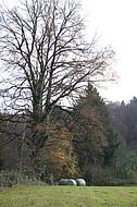 Silageballen auf Herbstwiese