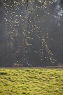 Leuchtende Zweige