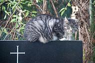 Katze auf Grabstein
